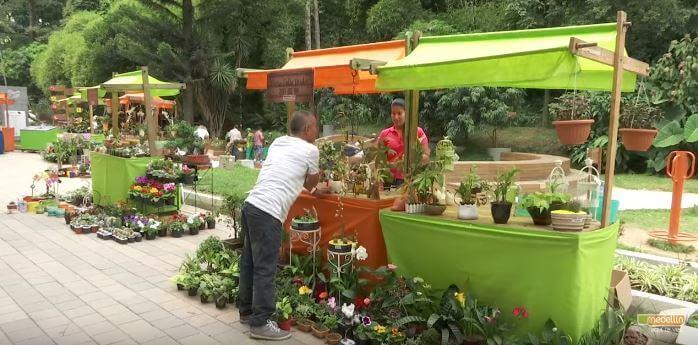 Disfruta del evento vivero de las flores en nuestro for Viveros medellin